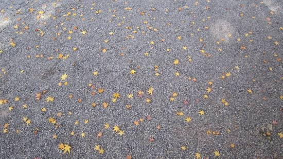 紅葉、落葉