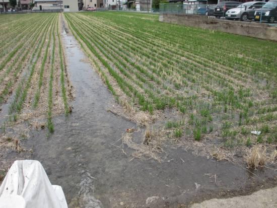 田圃に水が張られた