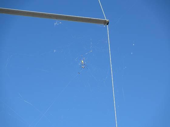2013-09-27_1551_右舷スプレッダー下に女郎蜘蛛の巣_IMG_5059_s.JPG