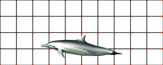 dolphin_POV_scene_w560h224q30.jpg
