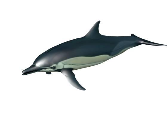 dolphin_2014_07_14_20_31_21_w560h420q30.jpg