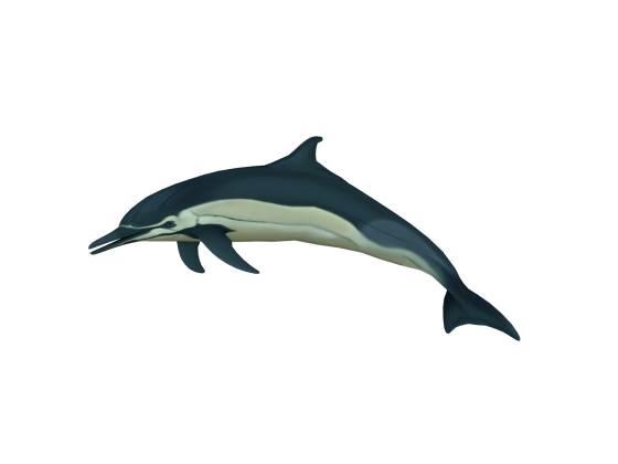イルカ ジャンプ
