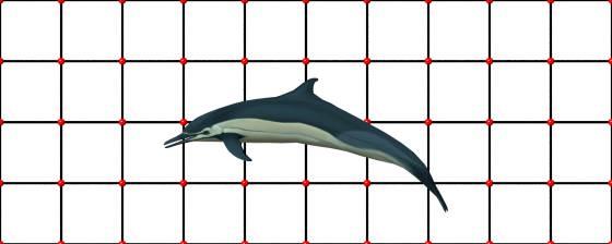 イルカ ジャンプ スケール合わせ