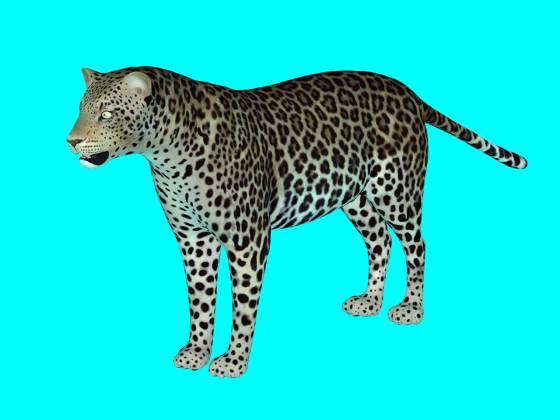 Leopard10_e_metaseq_2014_08_31_13_35_16_w560h420q30.jpg