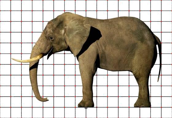 elephant_metaseq_POV_scene_w560h385q30.jpg