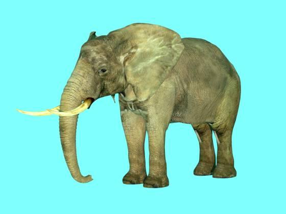 elephant_metaseq_2014_08_11_22_33_59_w560h420q30.jpg