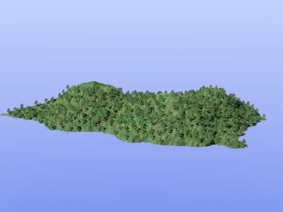 Mount_Forest_tg1_樹林+ブッシュ_w560h420q30.jpg