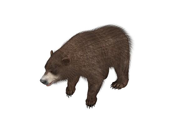 Bear_Brown_metaseq_2014_09_24_20_40_32_w560h420q10.jpg