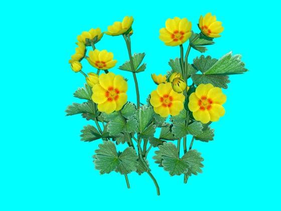 Flower_Potentilla_fragiformis_N011212_e1_2016_09_04_12_37_43_w560h420q10.jpg