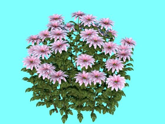 Flowers_chrysanthemums_N070416_e1_2016_09_14_23_23_14_w560h420q10.jpg