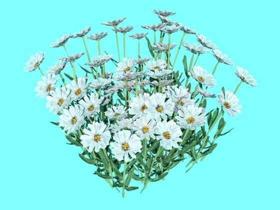 Flowers_camomile_N190913_e2_2016_09_15_00_46_18_w560h420q10.jpg