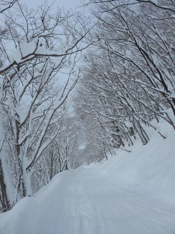 2017-01-17_1153_林道コース_IMG_7471_s.JPG