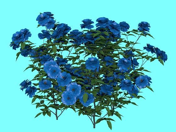 Roses bush N271216
