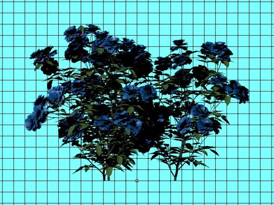 Roses_bush_N271216_e2_POV_scene_w560h420q10.jpg