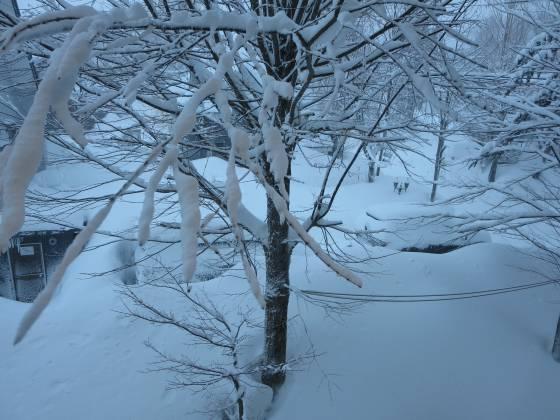 2017-02-21_0647_部屋から見た積雪_IMG_7992_s.JPG