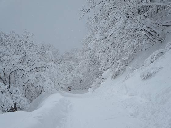 2017-02-21_1104_白樺ゲレンデから林間コース_IMG_8009_s.JPG