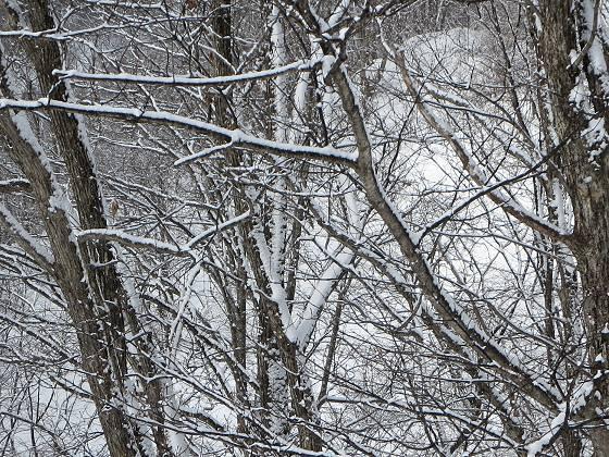 2017-02-26_0827_白樺クワッドリフトからハンの木に幹の北側に着雪_IMG_8253_ts.JPG
