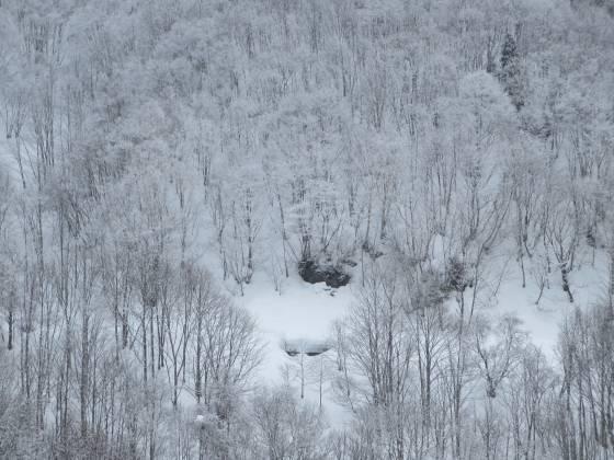2017-02-27_0906_ハンの木ゲレンデ急斜面周辺の霧氷_IMG_8329_s.JPG