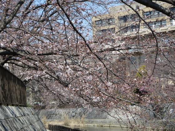 2017-04-04_1019_サクラ・庄下川_IMG_9076_s.JPG
