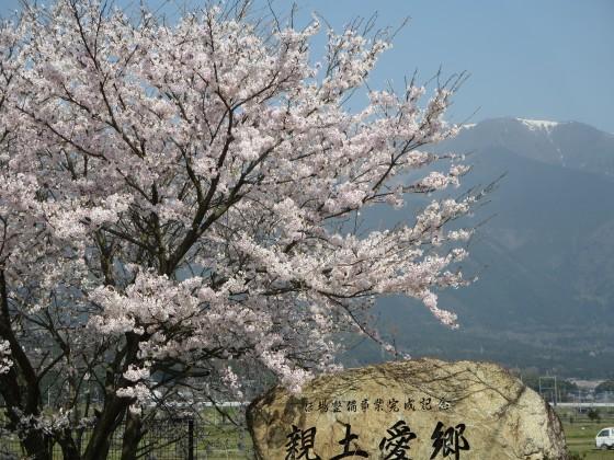 2017-04-14_0932_満開の桜と比良の山並み_IMG_9458_s.JPG