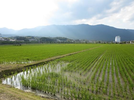 2017-06-15_1636_緑の稲と霞む比良の山並み_IMG_0888_s.JPG