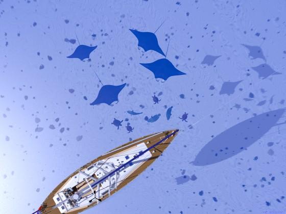 錨泊するセーリングクルーザーに引き寄せられる海の生き物