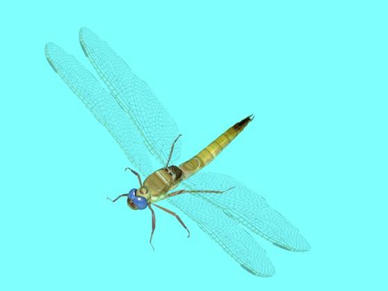 Anaciaeschna jaspidea dragonfly