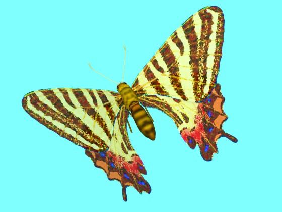 Puziloi Luehdorfia Butterfly