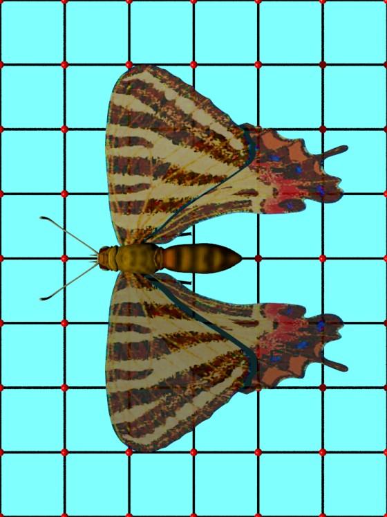 Puziloi_Luehdorfia_Butterfly_CadNav_e5_POV_scene_w560h747q10.jpg