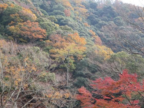 2017-11-28_1127_紅葉の山肌・箕面_IMG_3152_s.JPG