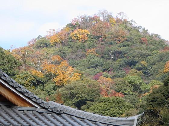 2017-11-28_1130_紅葉の山肌・箕面_IMG_3160_s.JPG