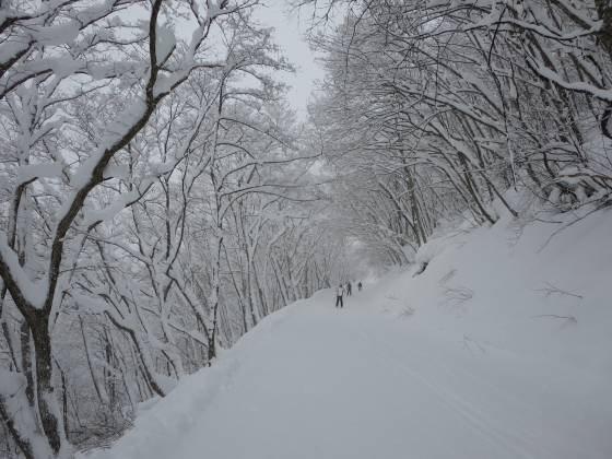 2018-01-11_0949_白樺ゲレンデからハンの木コースへ向かう林道コース_IMG_3696_s.JPG