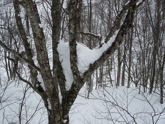 2018-01-10_1005_ハンの木高速ペアリフト・三股の雪_IMG_3986_s.JPG