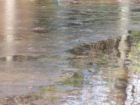 2018-01-24_1105_近松公園の池の氷_IMG_4073_s.JPG