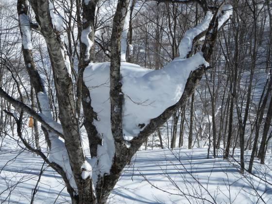 2018-02-14_0917_ハンの木高速ペアリフト横のハンの木の三股に雪_IMG_4223_s.JPG
