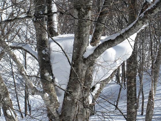 2018-02-18_1240_ハンの木高速ペアリフト横の三股の雪_IMG_6059_s.JPG