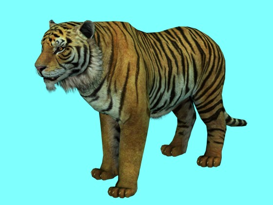 Bengal Tiger Animation