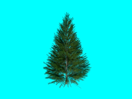 Evergreen Fir Tree