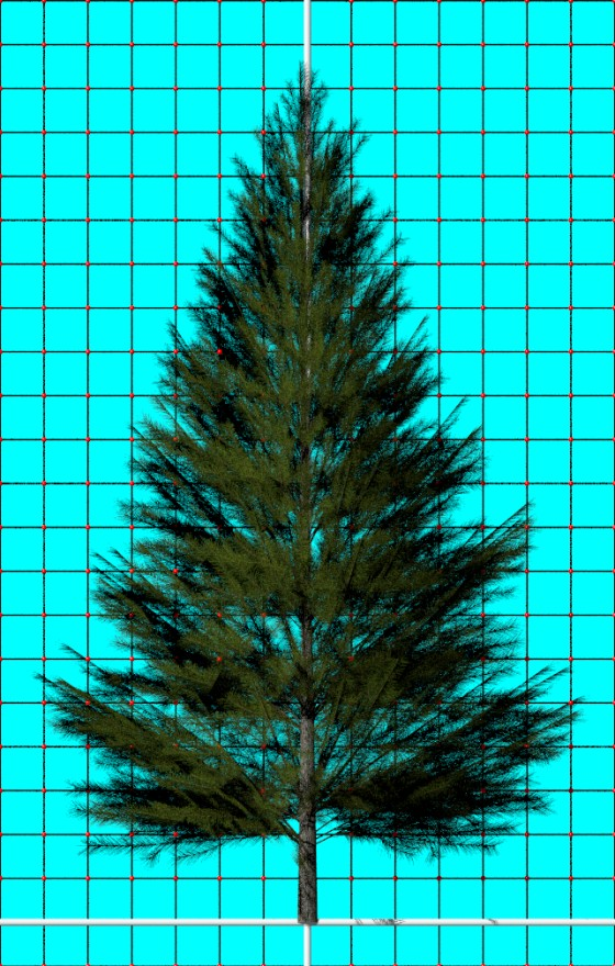 Evergreen_Fir_Tree_e1_POV_scene_w560h880q10.jpg