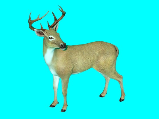 3D Deer model by Quinten1234