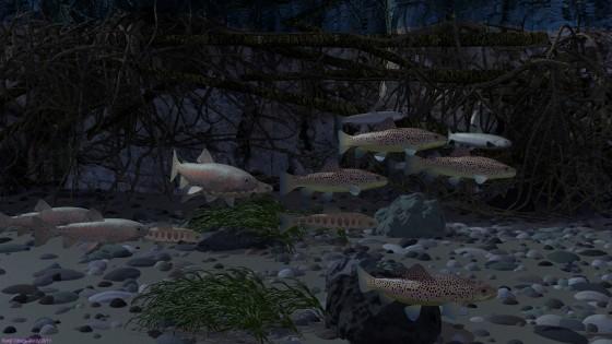 清流に群れるマス(その2)