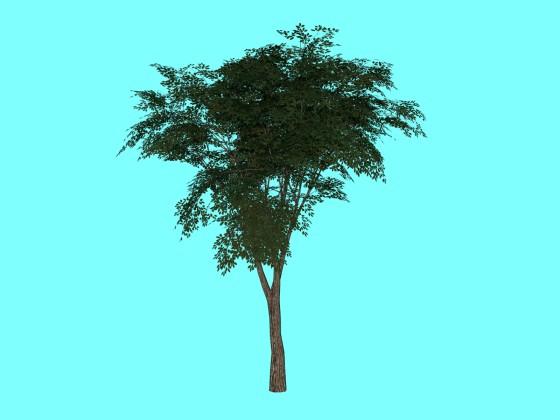 Tree by rezashams313