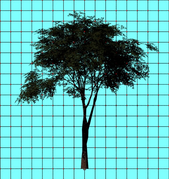 Tree_by_rezashams313_Free3D_e1_POV_scene_w560h594q10.jpg