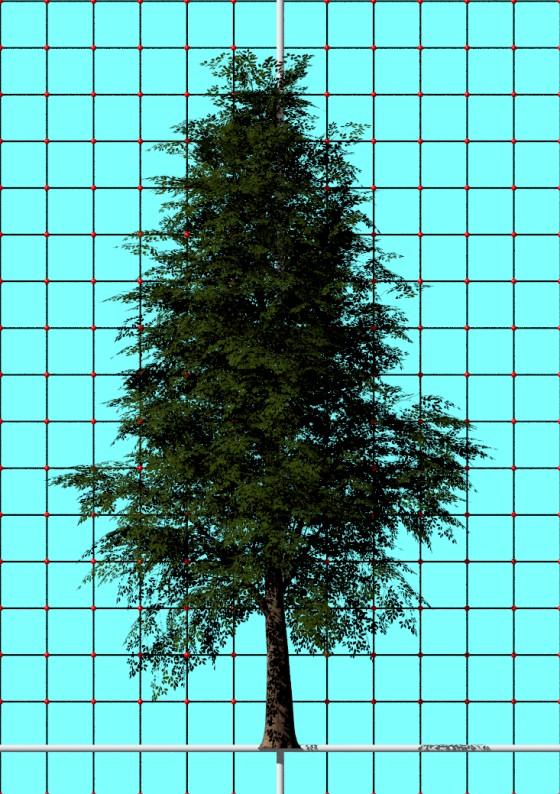 Tree02_rezashams313_Free3D_e1_POV_scene_w560h794q10.jpg