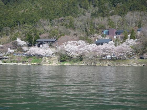 2018-03-31_1339_水ケ浜の桜_IMG_4922_s.JPG