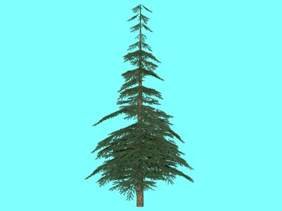 firtree 4
