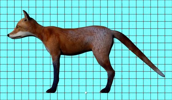 Red_Fox_Rig_fbx_obj_e1_POV_scene_w560h327q10.jpg