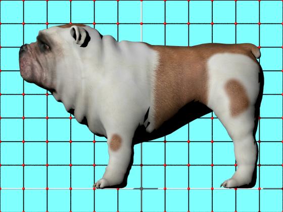 Bulldog_Pug_CadNav_e1_POV_scene_w560h419q10.png