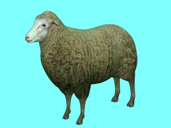 Sheep by azlyirnizam