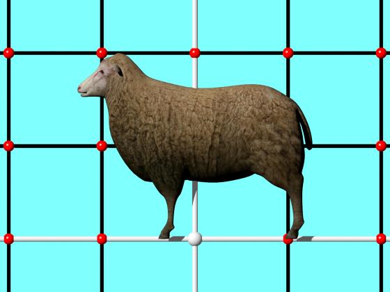 Sheep_Free3D_e1_POV_scene_w560h420q10.png